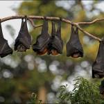 Colonia de murciélagos